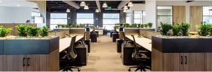Indoor Air Quality: Plants in The Office Increase Productivity